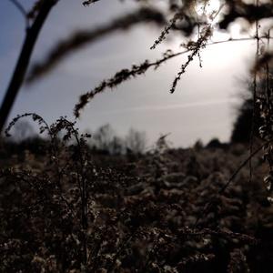 Pixelfed Photo: Morgentau