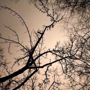 Pixelfed Photo: 🌌